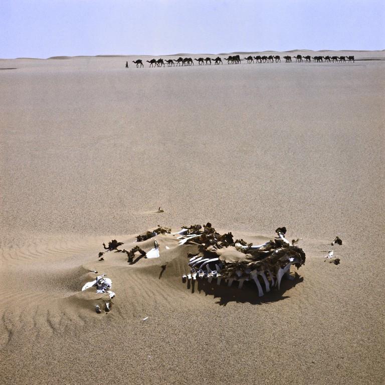 Azelaï est le nom donné aux caravanes transportant le sel de Bilma jusqu'à la ville d'Agadez. La piste réserve plus de mauvaises surprises que de bonnes, comme l'indique le squelette d'un chameau abandonné dans le sable, au premier plan.